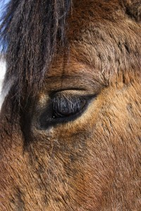 Closeup of the eye of a brown horse. Vertical shot.