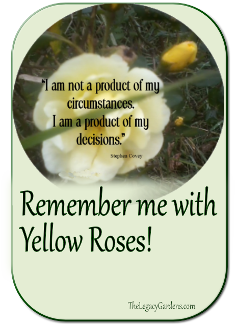 Remember me with Yellow Roses